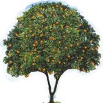 Лингвистический Центр «Апельсин»
